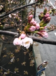 image/2012-04-04T23:45:25-1.jpg